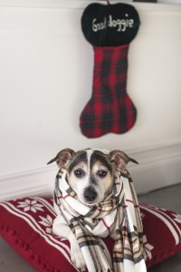 dog with scarf laying on a pillow,
